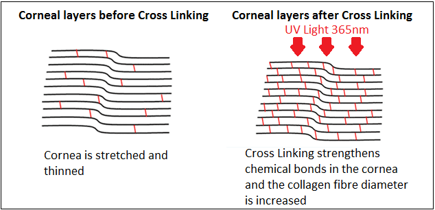 collagen-cross-linking