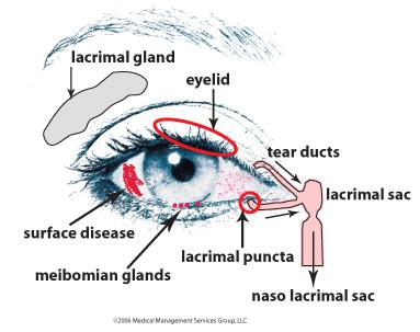 Parts of eyelid pertamini parts of eyelid ccuart Choice Image