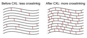 Crosslinking effect
